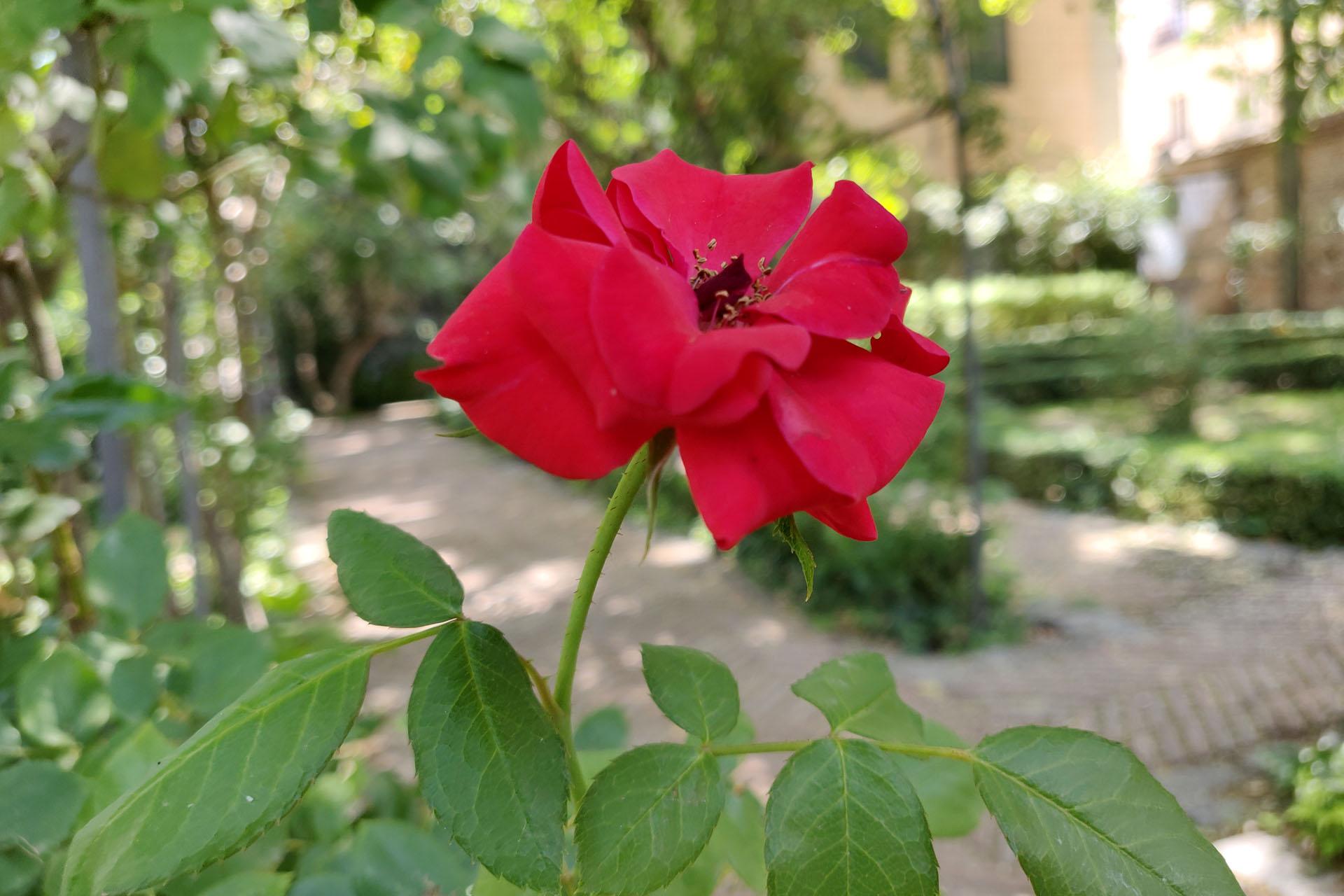 El Jardín del Príncipe de Anglona
